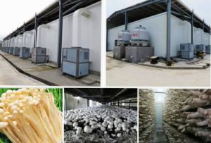 Climate Controlled Chiller for Mushrooms Cultivation. pictures & photos