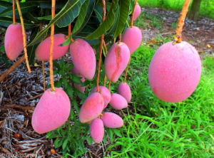 Amino Acid+Vitamin Formulation Liquid Fertilizer for Fruits & Vegetables pictures & photos