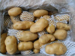 2016 New Crop Fresh Potato pictures & photos