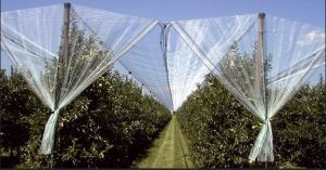 7X3mm 50G/M2 Agriculture Apple Tree Anti Hail Net Mesh pictures & photos