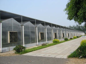 Galvanized Steel Frame Greenhouse with Factory Discount Price and Venlo Style