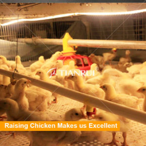 Save manpower poultry broiler breeding equipment used steel structure house pictures & photos