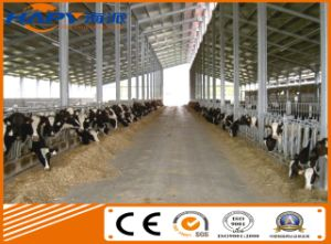 Professional Steel Structure Cattle Shed with Matching Equipment Design pictures & photos