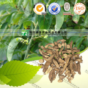 Manufacturer Supply Herbal Medicine Rheumatism Caulis Sinomenii pictures & photos