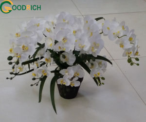 Mini Real Touch Orchid Artificial Flower pictures & photos