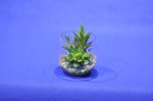 Artificial Plants and Flowers of Mini Plant Succulent Gu-SD0308 pictures & photos