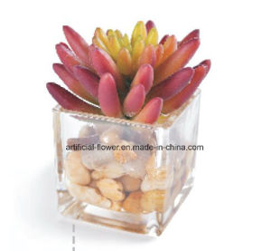 China Supplier Artificial Succulent for Decoration pictures & photos