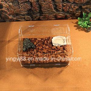 Newest Acrylic Reptile Terrarium for Snake Lizard Testudo Vivarium Tank Assembled pictures & photos