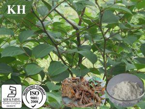 High Natural Polygonum Cuspidatum P. E pictures & photos