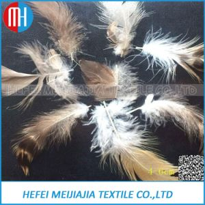 China Supplier Down Nature Washed Grey Duck Feather for Sales pictures & photos