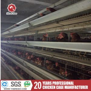 Poultry Equipment and Machine Bird Cage Broiler Chicken in Pakistan pictures & photos