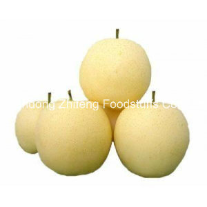 Fresh Golden Pear pictures & photos