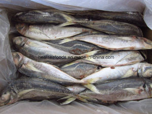 Frozen Small Eye Horse Mackerel Fish pictures & photos