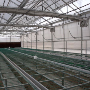 PC Sheet / Polycarbonate Greenhouse for Vegetable Growing pictures & photos