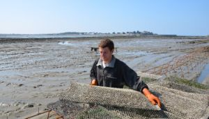 800grab Oyster Grown Bags/Cages, Plastic Net Bag pictures & photos