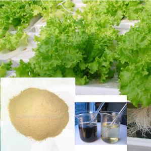 Zymolysis Amino Acid Powder pictures & photos