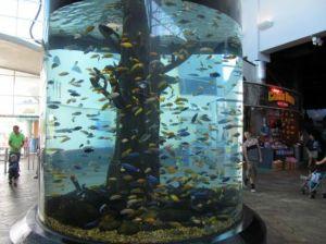 Fiberglass Fish Tank pictures & photos