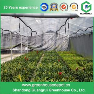 Glass Multi Span Agricultural Greenhouse Type Cheap Greenhouse on Sale pictures & photos