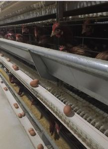 Hot Sale Chicken Farm Automatic Layer Cage pictures & photos