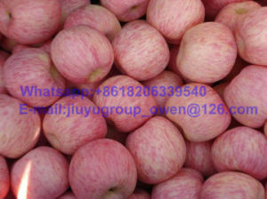 Shandong Origin New Crop FUJI Apple Top Quality pictures & photos