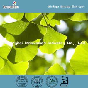 100% Natural Bulk Ginkgo Biloba Extract (24/6) /Ginkgo Biloba Extract Powder
