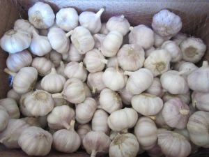 Henan Origin White Garlic pictures & photos