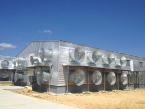 a Type Automatic Poultry House Layer Cage pictures & photos