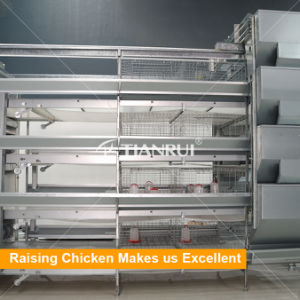 H Type Automatic Baby Chicks Farming Cage for Pullet Farms pictures & photos