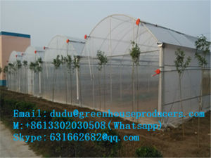 Factory Directly Selling Cheapest Film Greenhouse / Venlo Greenhouse pictures & photos