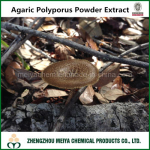 Herb Medicine Agaric Polyporus Plant Extract with Polysaccharides 10-50% UV pictures & photos