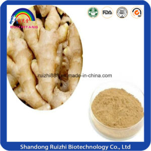 Wholesale Products Herbal Extract / Dried Ginger Extract pictures & photos