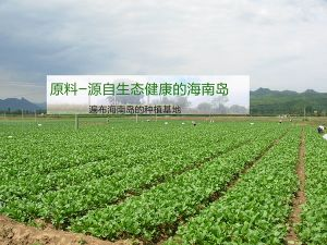Pure Natural Fresh Dried Chinese Flowering Cabbage Powder/Vegetable Powder pictures & photos