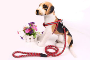 Pet Products Supply Dog Fluorescent Light Harness (H010) pictures & photos