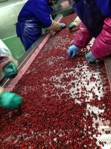 Frozen Lingonberry or IQF Lingonberry pictures & photos