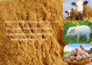 Non-GMO 60% Corn Gluten Meal pictures & photos
