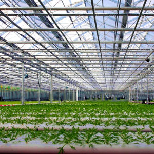 High Quality 100% Virgin Material Large Glass Agricultural Equipment Greenhouse pictures & photos