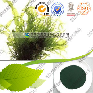 Wholesale Feed Grade Spirulina Powder with High Quantity pictures & photos