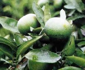 Citrus Aurantium Extract Lose Weight 6% 30% Synephrine pictures & photos