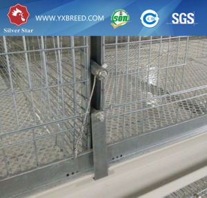 3.0mm Thickness Wire Mesh Poultry Equipment for Chicken Raising pictures & photos