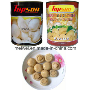 Canned Champignon Whole Mushroom in Tin pictures & photos
