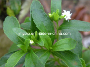 High Quality Steviaoside 80%, 90%, 95%, 98% Stevia Extract pictures & photos