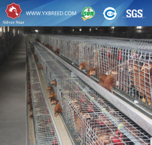 Silver Star Battery Layer Cage pictures & photos