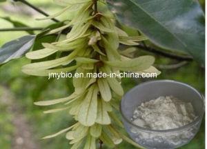 High Quality Engelhardtia Roxburghiana Leaf Extract Astilbin 15%, 98% pictures & photos