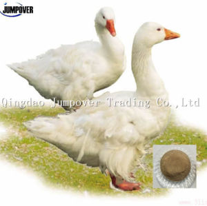 Poultry Feed Kelp Meal for Animal pictures & photos