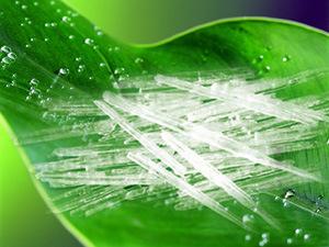 Menthol Crystal (BP/USP) L-Menthol (Natural Menthol Crystal)