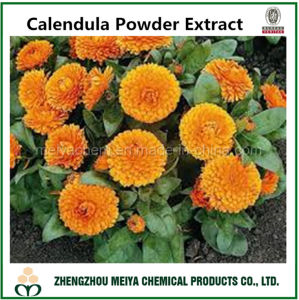 Calendula Powder Extract pictures & photos