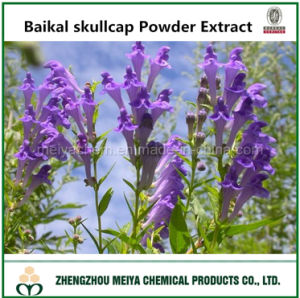 Best Sale Baikal Skullcap Powder Extract with Baicalin 30% -98% HPLC pictures & photos