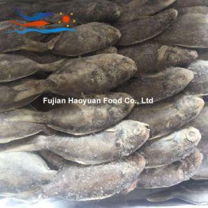 Producing Frozen Fish Promfret pictures & photos