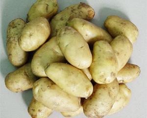 Potato (Holland No. 7-3)