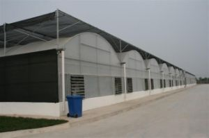 Hot Sale Venlo Polycarbonate Sheet Green House pictures & photos